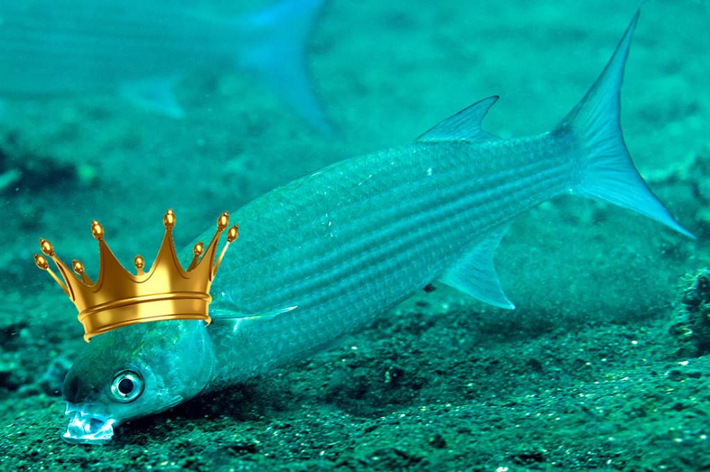 Kefal Balığı Hakkında Tüm Bilgiler En Lezzetli Kefal Tarifi
