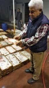 mersin mandagöz balığı