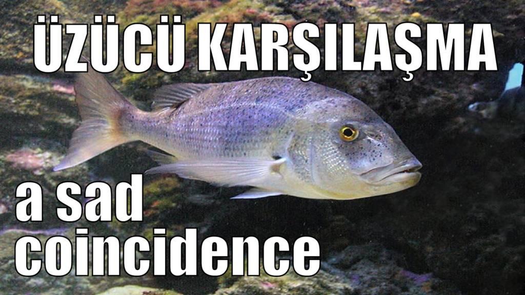 mercan balığı