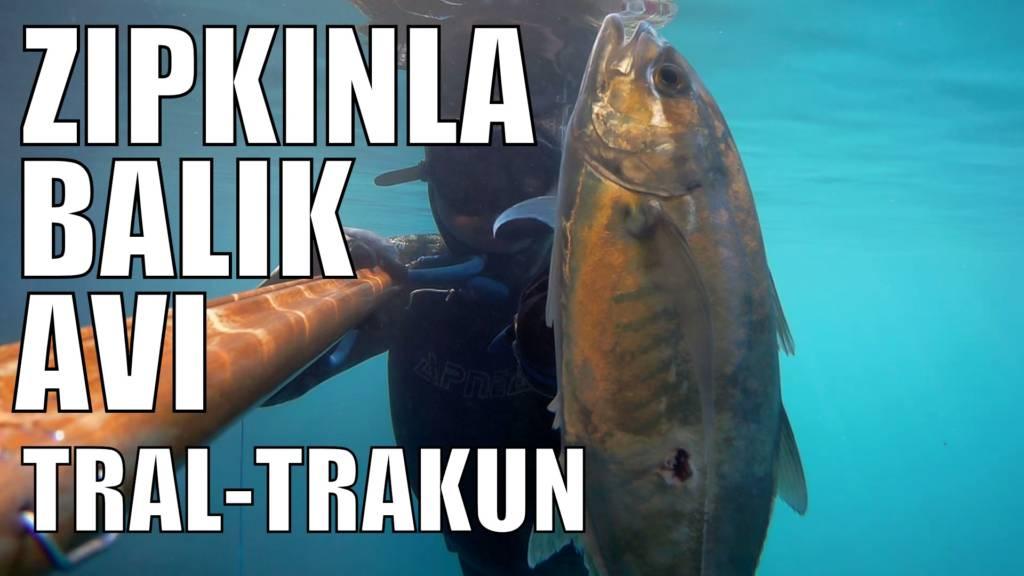 Tral-Travilya-Trakun Balığı İle İlgili Her Şey Bu Yazıda | Zıpkınla Balık Avı | Zıpkınla Balık Avı Videoları