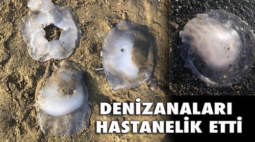 denizanasi1