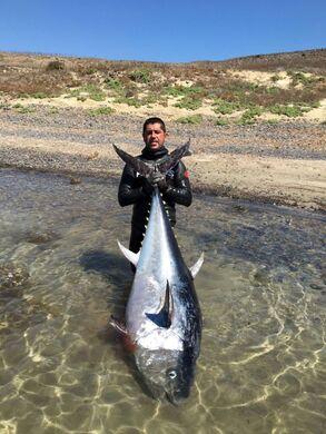 zıpkınla balık avı Orkinos 130 kg