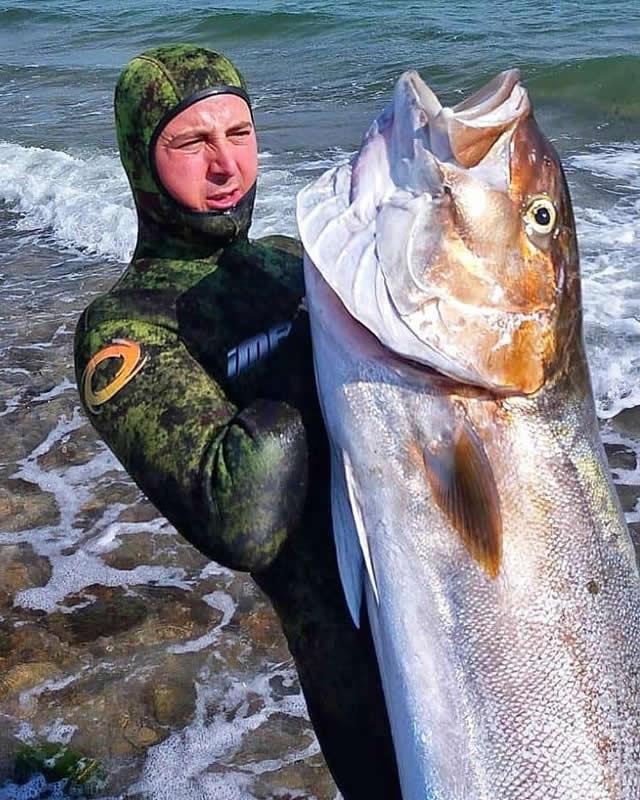 zıpkınla dev akya kuzu balığı avı