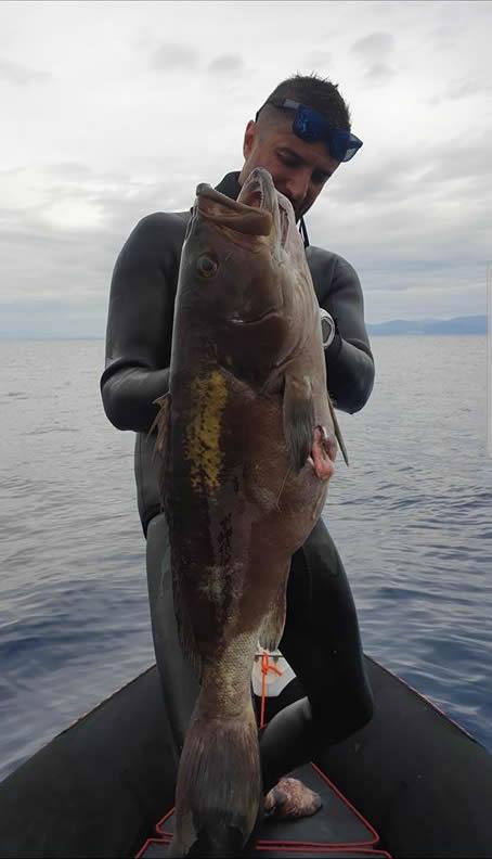 grida balığı zıpkınla grida avı trofe grida balığı