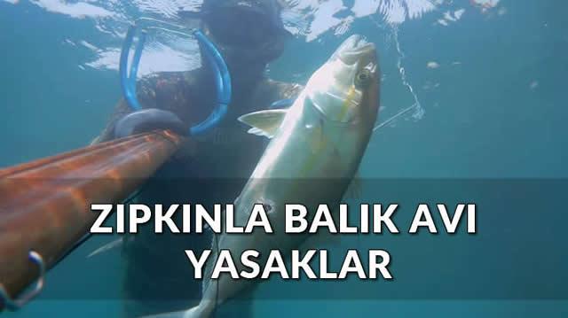 zıpkınla balık avı yasaklar