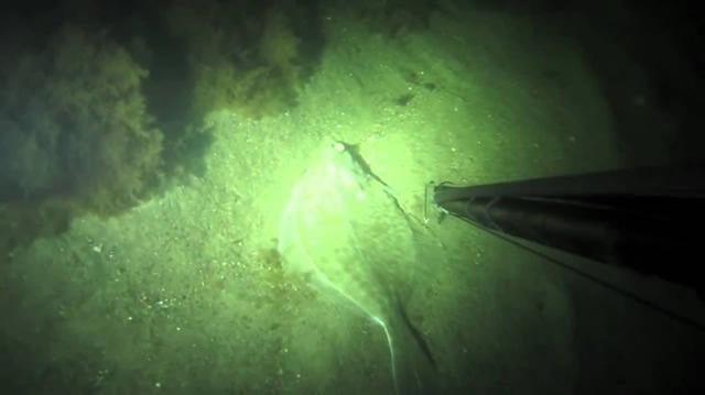 gece zıpkınla balık avı