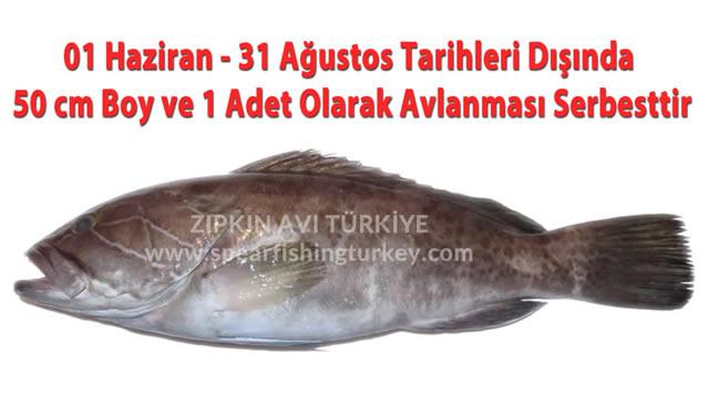 Lagos Balığı